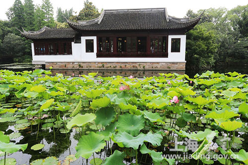 Jiading kicks off annual water lily and lotus show