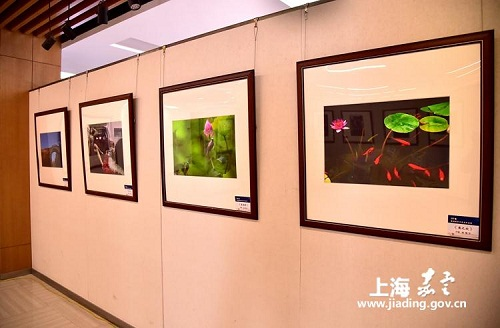 Jiading photography association hosts exhibition